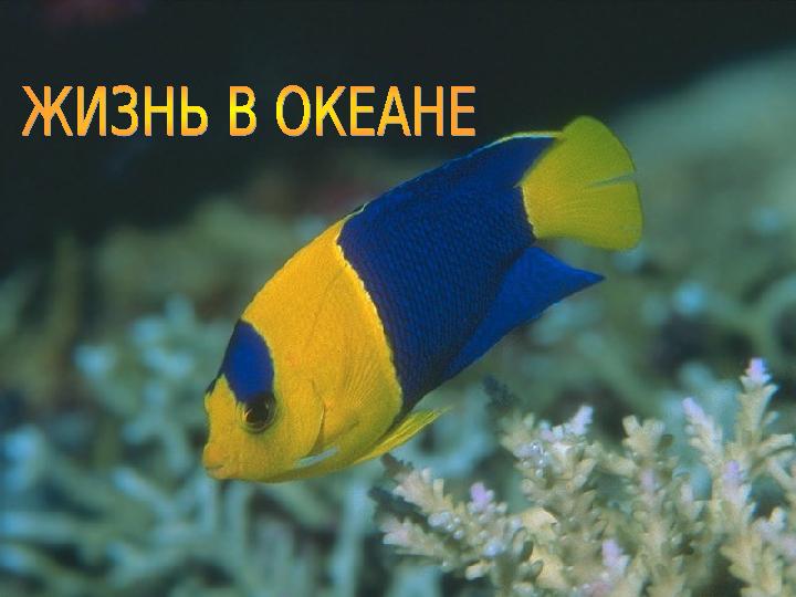 Презентация «Жизнь в океане»