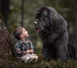 Маленький мальчик с большой собакой