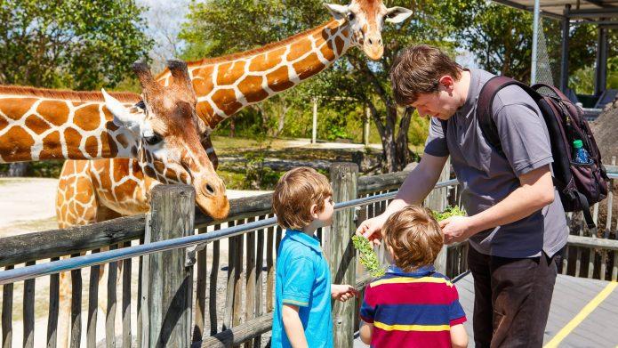 Папа с детьми в зоопарке