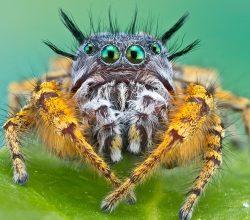Яркий мохнатый паук
