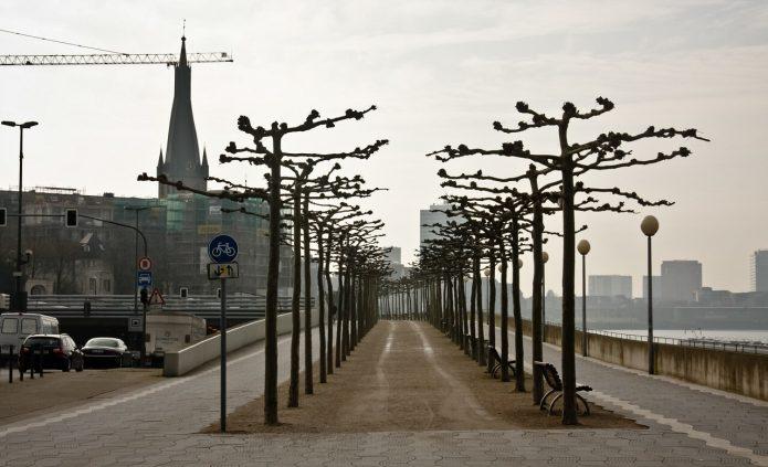 Аллея на набережной Рейна